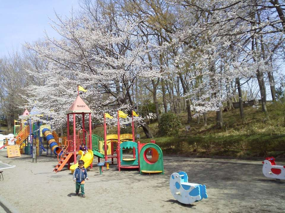 Cherry blossom viewing with kids at Kitamoto Children's park