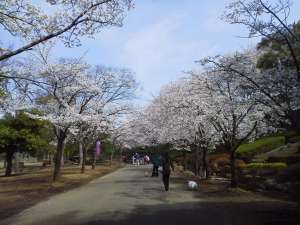 Ageo Maruyama Park in Spring