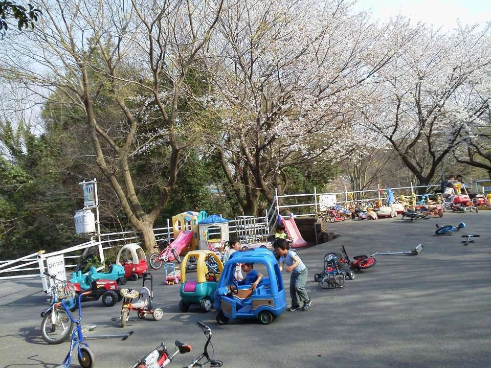 Push along toys at Enomoto dairy Farm back dropped by cherry blossoms