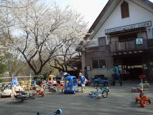 Hanami spot with toddlers; Enomoto Farm, Ageo