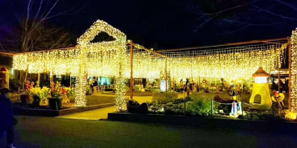 Starlight Christmas at Shinrin Park