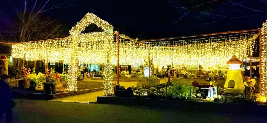 Starlight christmas