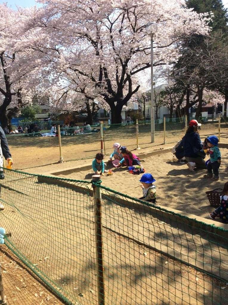 Miyoshino shrine 三芳野神社花見 桜