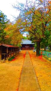 Autumn leaves in Saitama