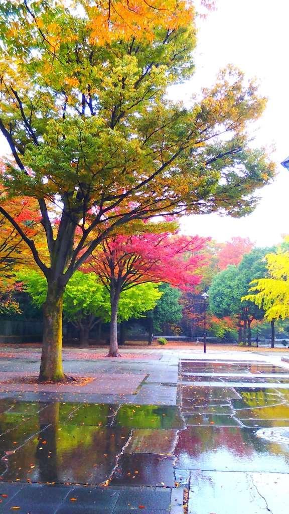 Hikarigaoka Autumn Leaves