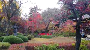 Autumn Leaves at Edo Castle remains| Kitain Temple
