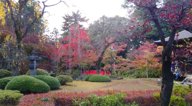 2015 Autumn Leaves at Edo Castle remains| Kitain Temple