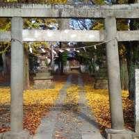 Gingko Trees at Ukishima Inari Shrine | Kawagoe