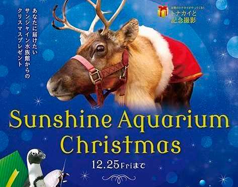 Santa Dive, Reindeer Photo|Sunshine Aquarium Christmas