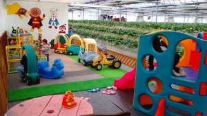 Strawberry Picking with a play area | SAKADO