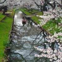 Boat Ride on Shingashi River Hikawa Shrine in 2020 | KAWAGOE