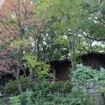Midori No Mura Campsite log cabin nestled in the woods