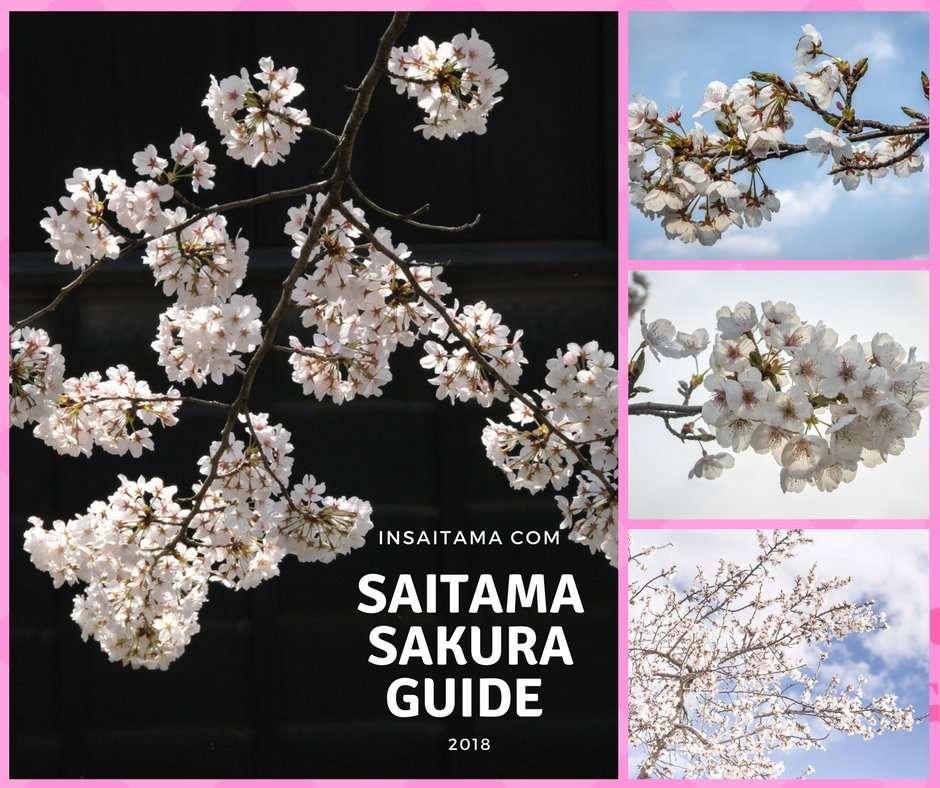 🌸Saitama Sakura Guide🌸