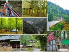 Mahoba no Mori Ueno skybridge Forest adventure