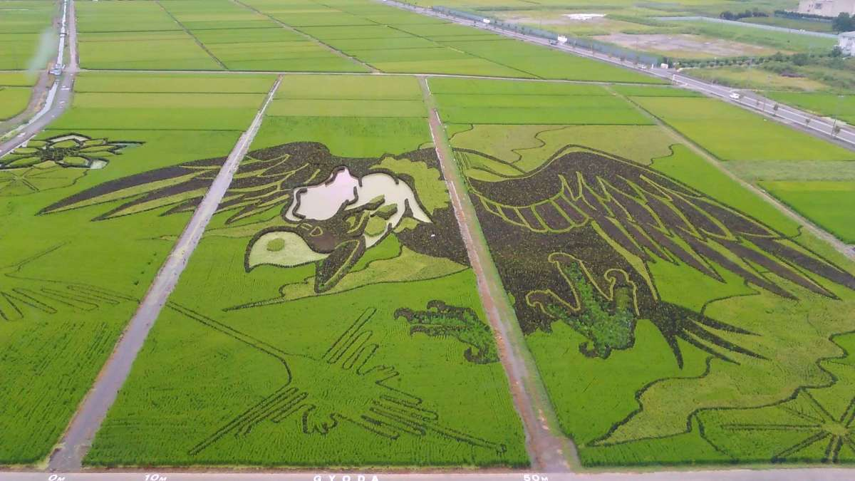 Great Wings and Nazca Lines Rice Paddy Art | GYODA