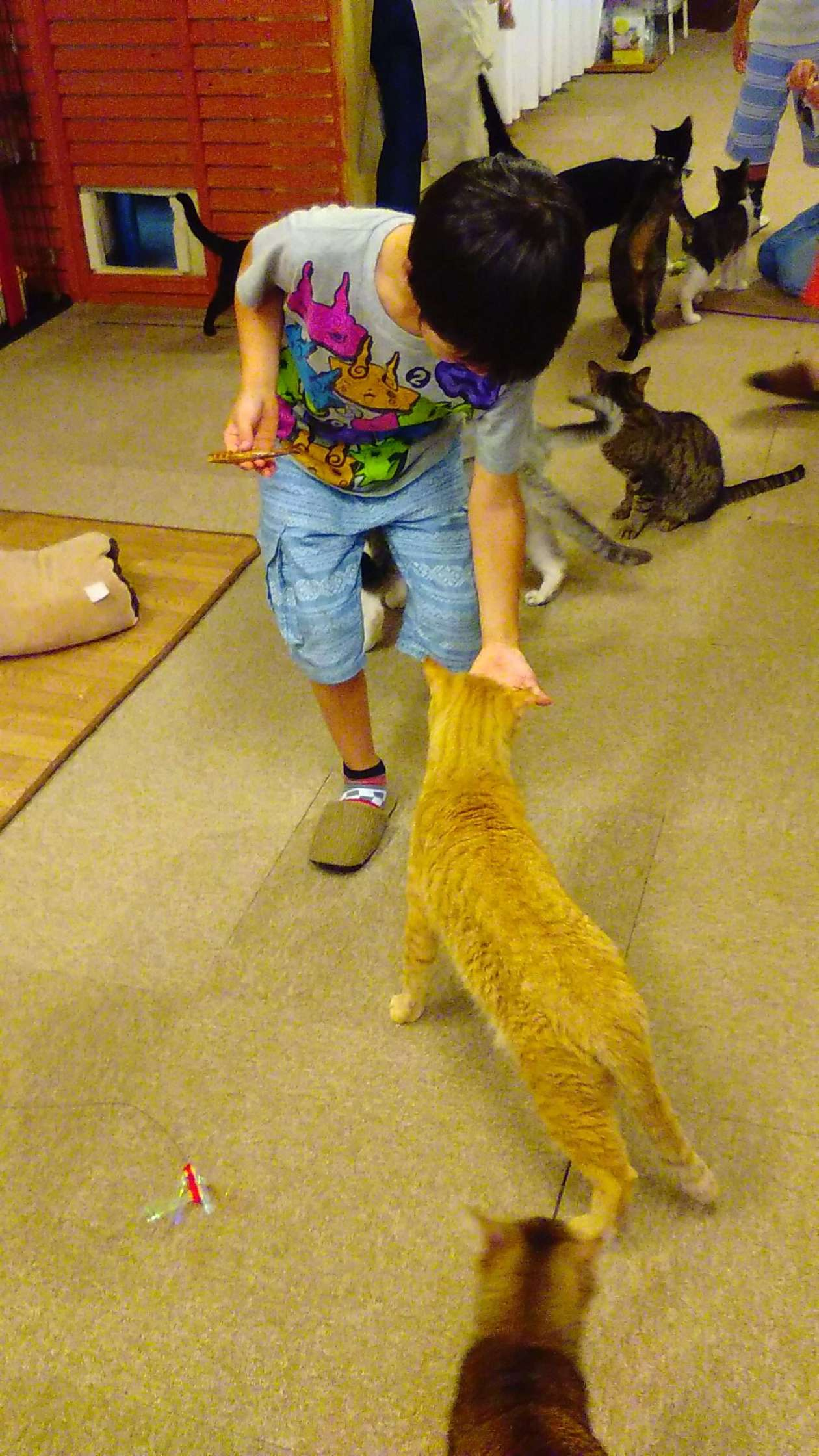Feeding a cat treat at snack time at a cat cafe