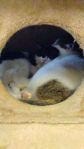 Protection Cat Cafe Neko Katsu | KAWAGOE