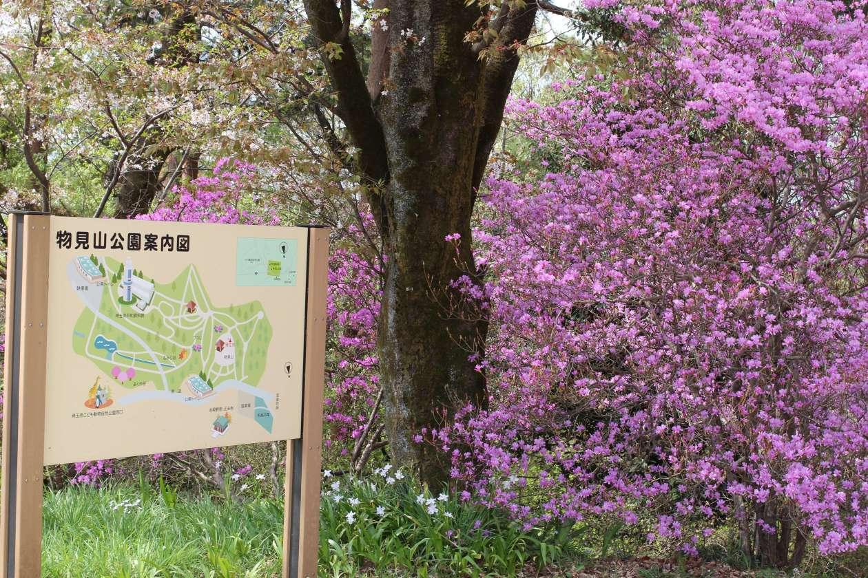 Monomiyama Park map with Azalea April 2018