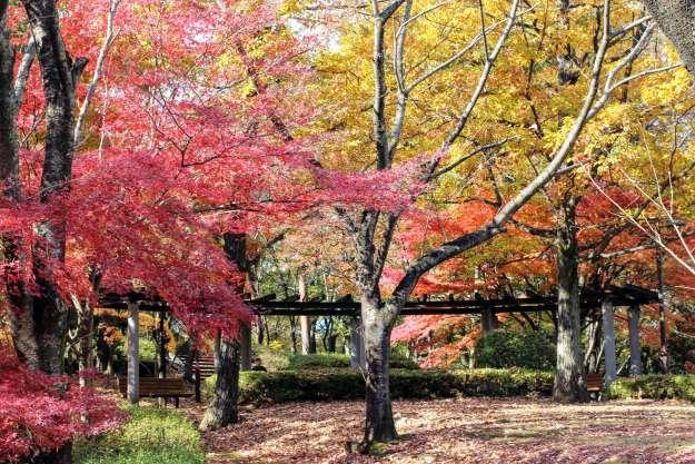 Stunning leaves at Monomiyama Park