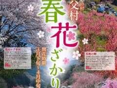 Ouchizawa Peach Blossom Festival