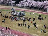 Kumagaya Air base cherry blossom festival