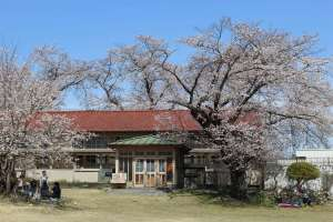 Anime and sakura famed  Shimozato ES | OGAWA
