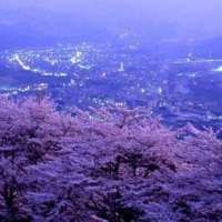 Minoyama Cherry Blossoms | CHICHIBU