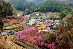 Peach Blossoms Yoshida