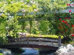 Kawajima rose festival rose tunnel wading river