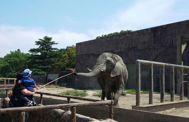 Elephant feeding at Tobu Zoo Saitama with kids Things to do in Saitama