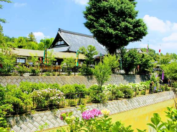 Kinsenji Ranzan Things to do in Saitama in June Hydrangea Temple (4)