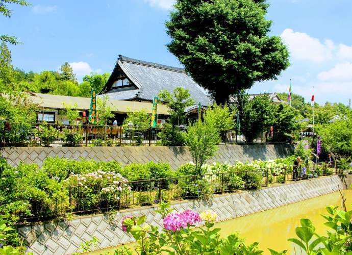 Kinsenji Ranzan Things to do in Saitama in June Hydrangea Temple (4) Rainy Season