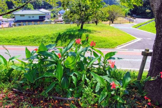 Flowers at Higashimatsuyama Agriculture Park