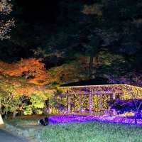Starlight Illumination at Shinrin Park | NAMEGAWA