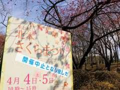 Kitamoto Sakura Matsuri