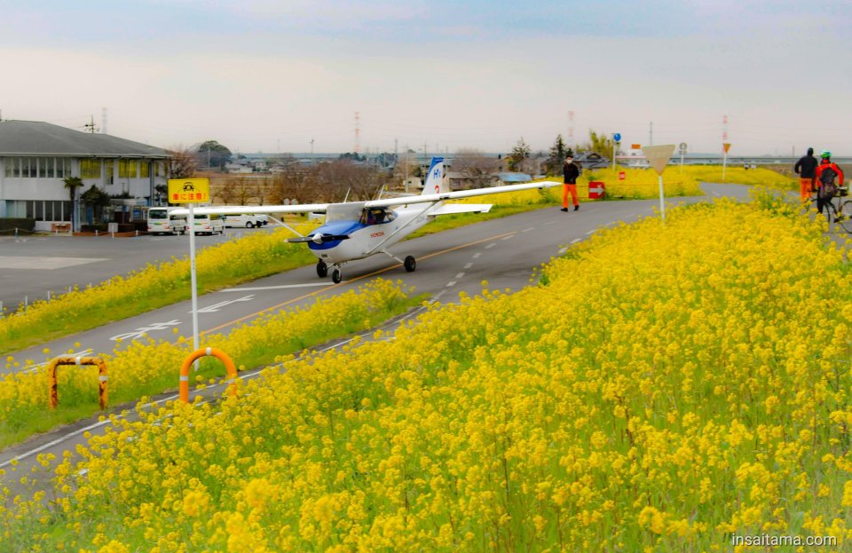 Honda Airport plane and nanohana canola flowers