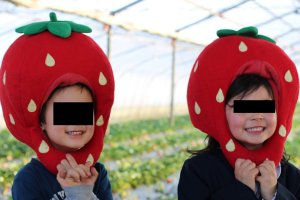 Imanishi strawberry picking farm Yoshimi