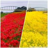 Off the beaten path scenery in Kawajima, Saitama Prefecture