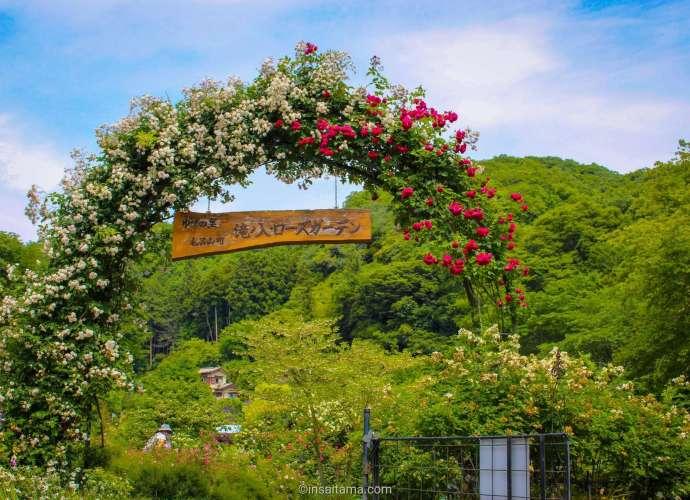 Takinoiri Rose Garden Moroyama Town Iruma County