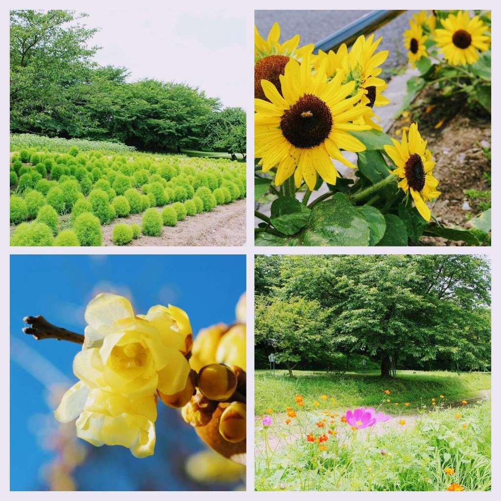 seasonal blooms at gongendo park