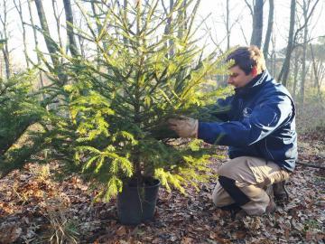 treesitting poggio valicaia