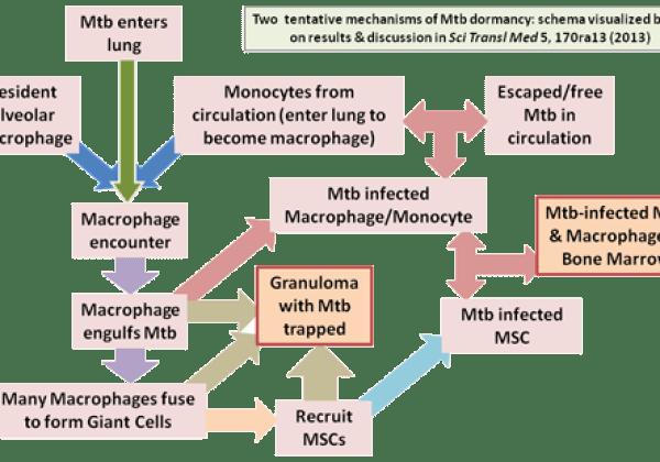 MSC-Mtb