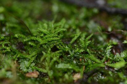 My Halloween moss holding on