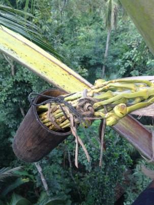 Herstellungsprozess mit Blüte in Bungbung