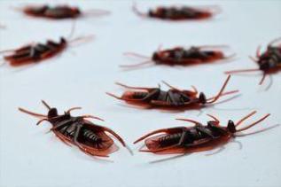 Хлебарки 1 - храна