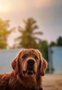 Препарат за външно обезпаразитяване на кучета 1 - куче