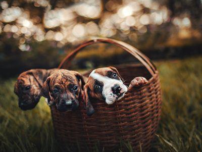 Външно обезпаразитяване 1 - кученца