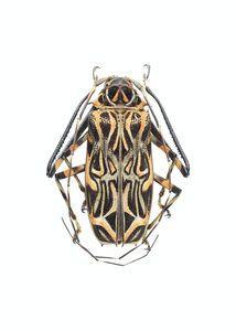 Как да се отървем от хлебарки 1