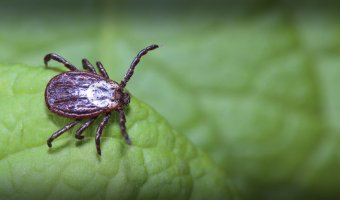 Tick Quiz: True or False?