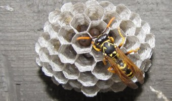 Why You (and your kids) Should Love Wasps